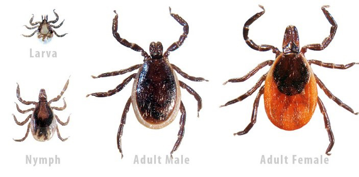 Lyme Disease Now in All 50 States