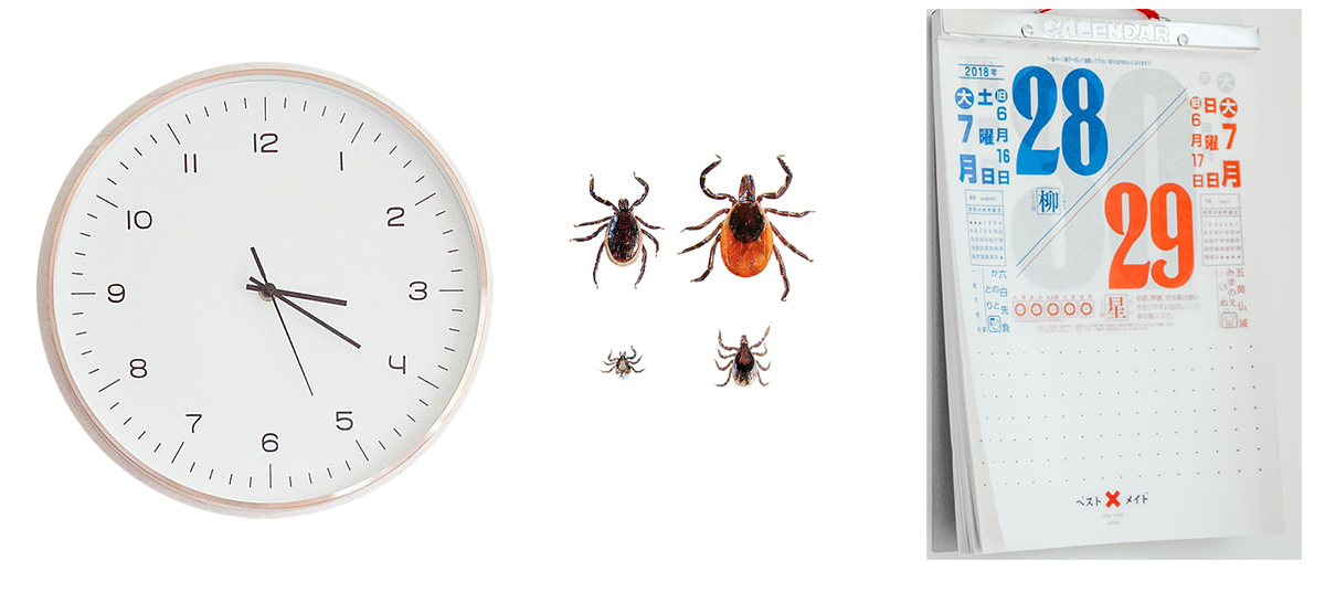 How Long Does it Take to Get Infected with Lyme